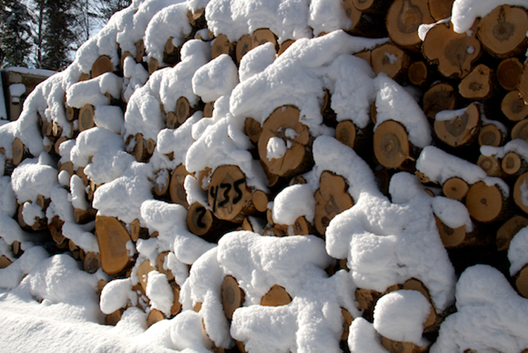 Snow covered wood