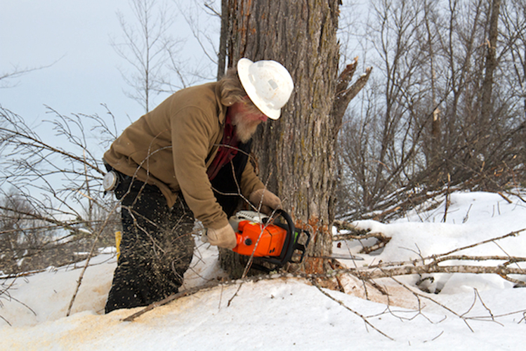 Jay Bierlein cutting down a tree.