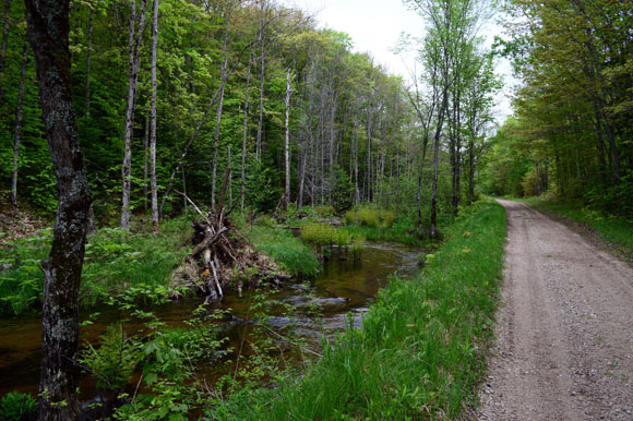 Delia's Run, next to the Haywire, in the Hiawatha National Forest.
