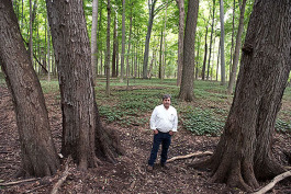 Scott Robbins stands among Michigan maples.