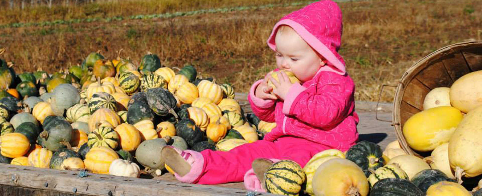 In the fall, Mark and Deanna Jones keep a large supply of pumpkins.