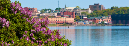 Lilacs in bloom , Marquette lower harbor I Shawn Malone